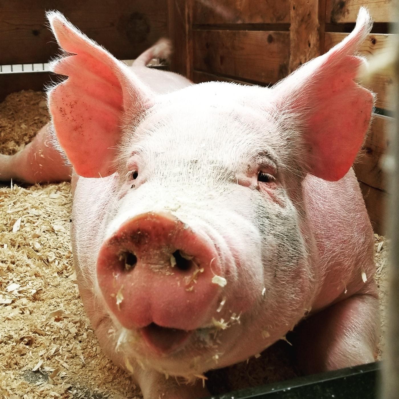 ワイ筋トレリーマン、ベンチ豚に威圧されて泣く😭