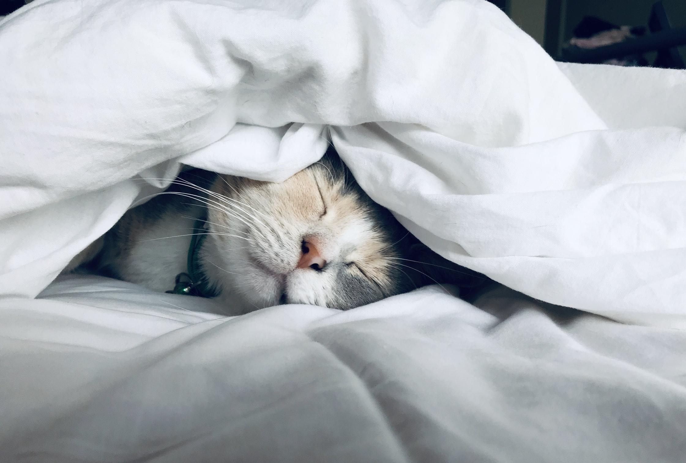 ガチで筋トレしてる連中に不眠症いない説